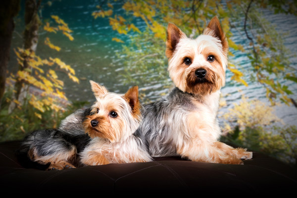 Warrington Pet Photographer