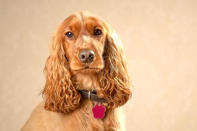 Warrington Pet photographer