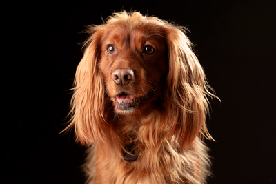 Pet Photographer in Warrington
