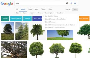 Google images search for a tree photograph